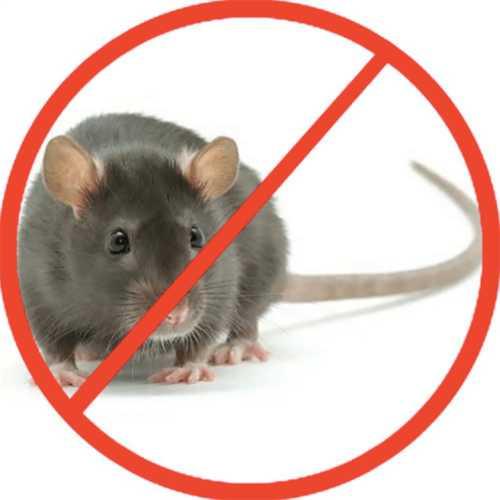 diệt chuột uy tín