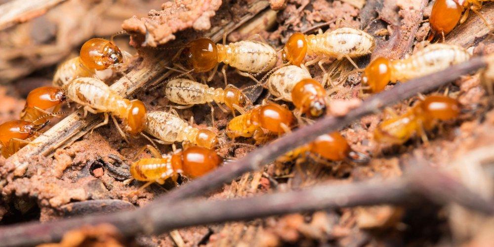 dịch vụ diệt mối côn trùng tại Long An