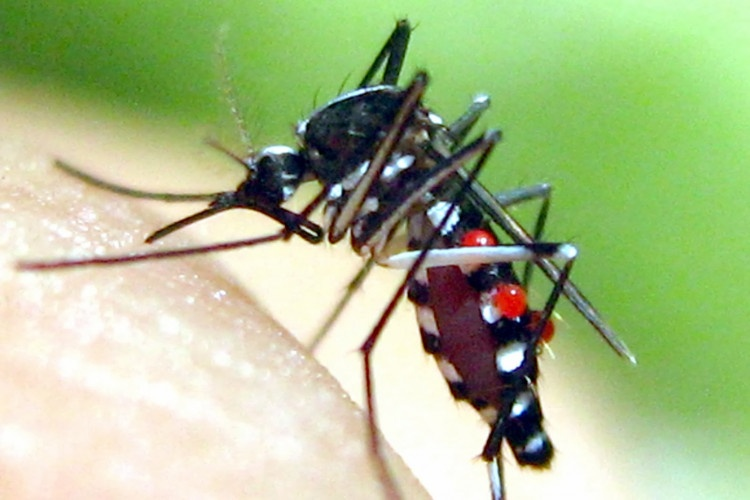 dịch vụ diệt muỗi Đà nẵng