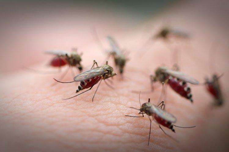dịch vụ diệt muỗi tại Long An