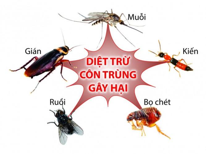 diệt côn trùng tại nhà ở Củ Chi