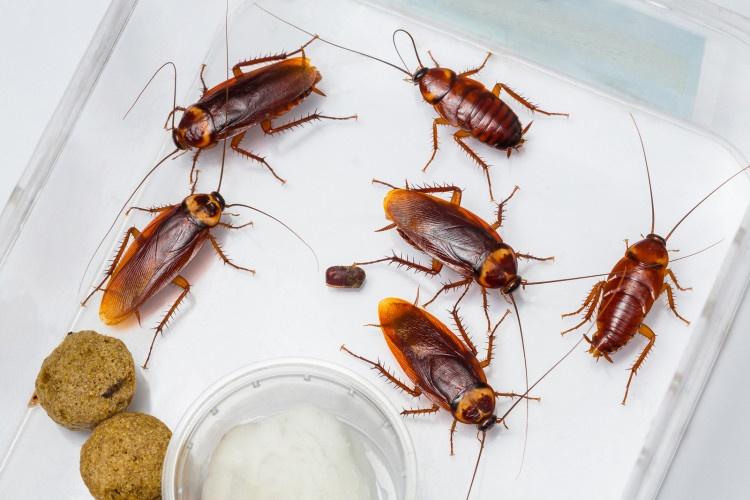 diệt côn trùng tận gốc ở Bình Dương