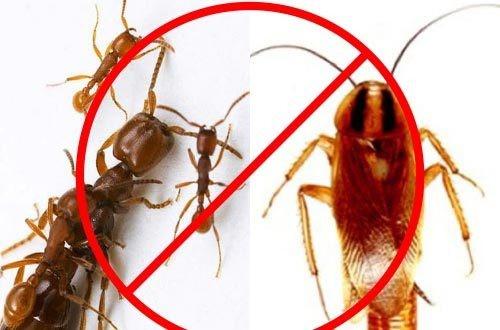 diệt kiến gián tận gốc ở Củ Chi