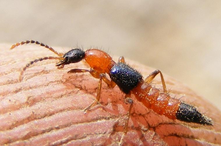 diệt kiến hôi hiệu quả tại Đồng Nai