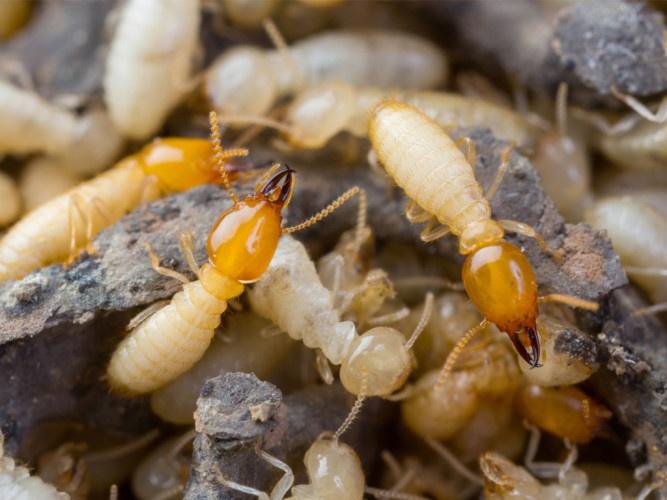 diệt ruồi muỗi kiến gián tại Bình Dương