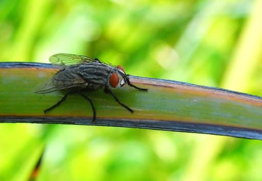 diệt ruồi nhanh chóng ở Đồng Nai