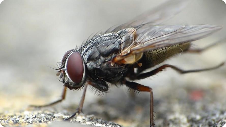 diệt ruồi tại nhà tại Long An