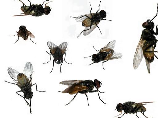 diệt ruồi tận gốc ở Long Thành